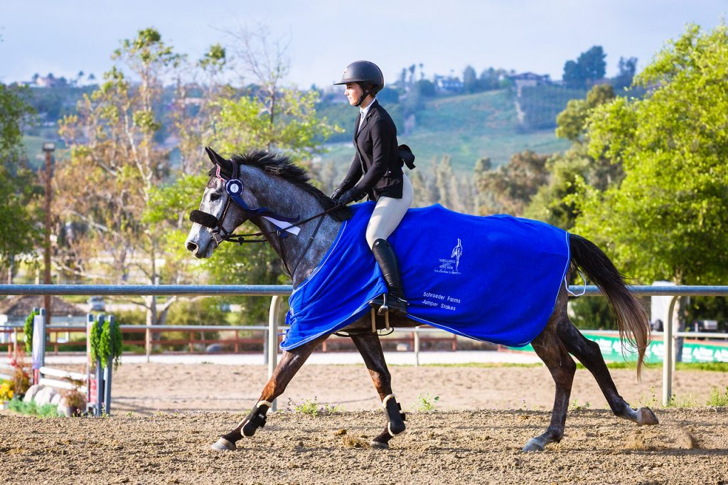 Retired Racehorses Flourish at CARMA's Thoroughbred Classic Horse Show