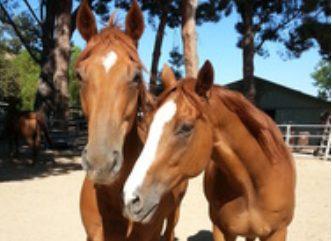 Farralone Farms (LA Pet Rescue)