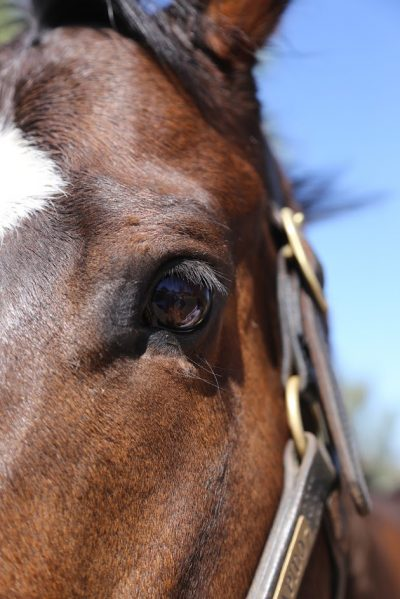 CARMA Grants $350,000 to 20 Thoroughbred Aftercare Charities